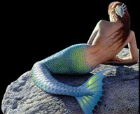 why mermaids arent real essay