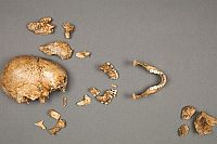 17th-century remains of a young girl excavated from Jamestown, Virginia, show evidence of cannibalism in the colony.