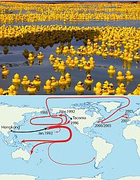 rubber-ducks-sea