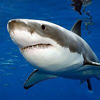 From Jaws to Katherine the Great White Twitter SharkOld Salt Blog